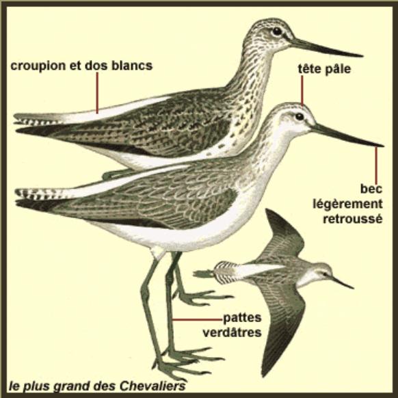 oiseaux-europe.com