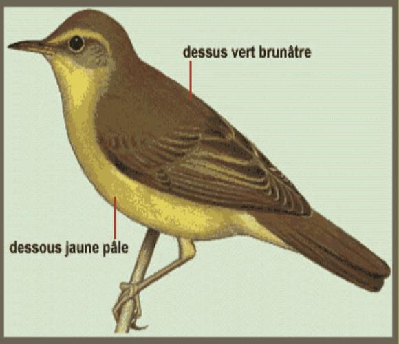 oiseaux-d'europe.com